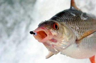 Приготовление эффективных зимних прикормок для рыбалки на плотву